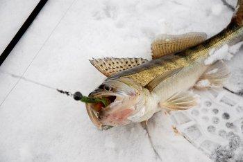 Наживки, насадки и приманки для рыбалки